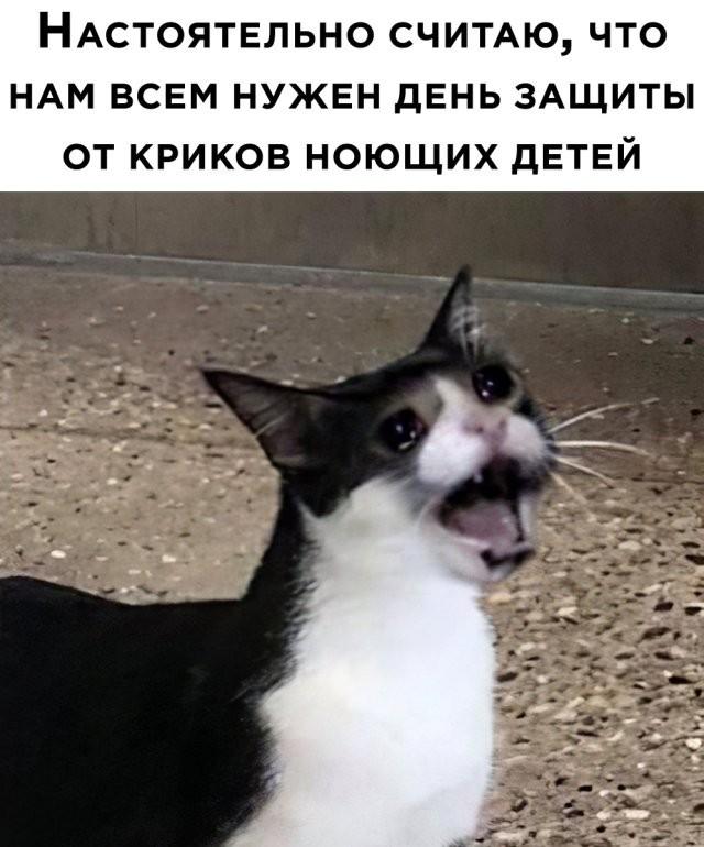Подборка прикольных фото (63 фото) 02.06.2020