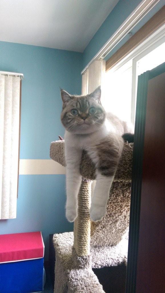 Очень кошачья подборка (27 фото)