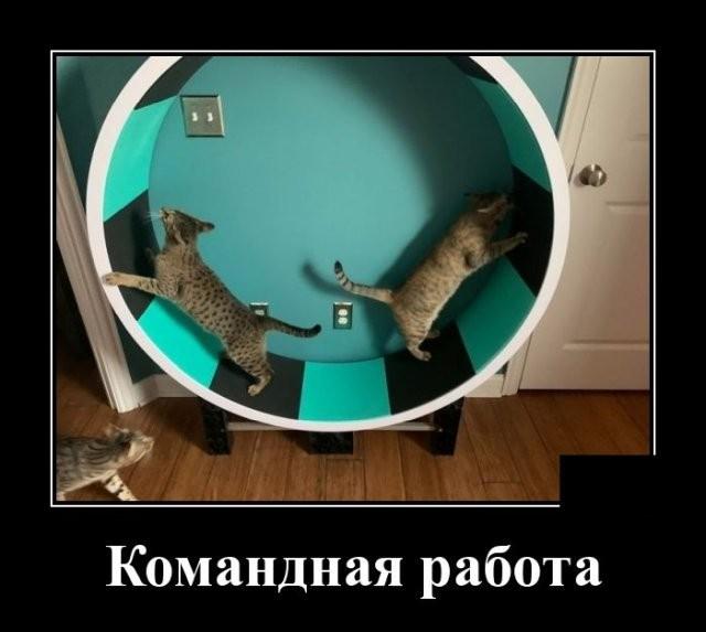 Демотиваторы (20 фото) 04.06.2020