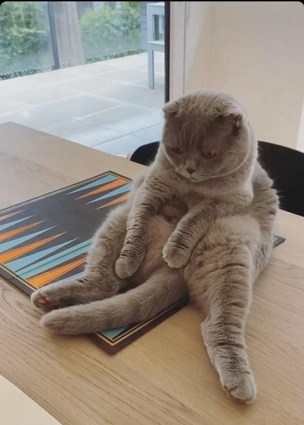 Коты, которые сидят как люди (19 фото)