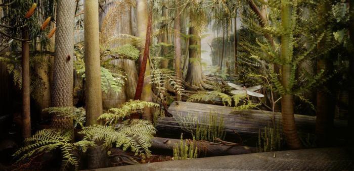 Как выглядели леса в период карбона (4 фото)