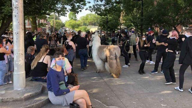 В Портленде появился очень необычный демонстрант (3 фото)