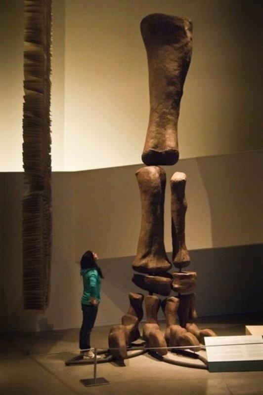 Фото которые заставят задуматься о реальных размерах человека (21 фото)