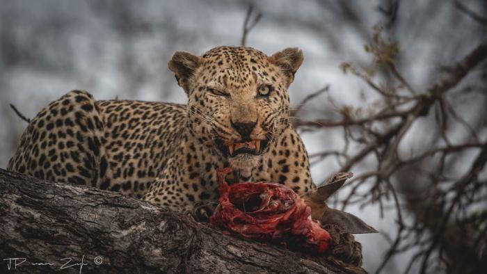 Лучшие фотографии Африки 2020 (32 фото)