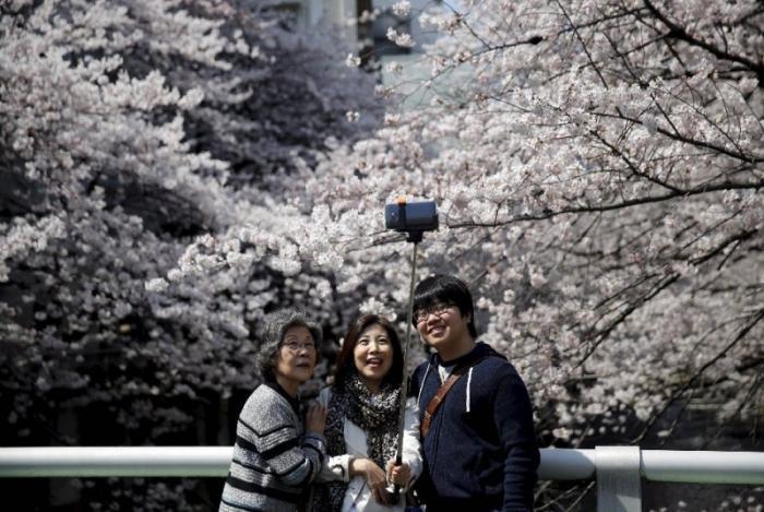 Японская традиция любования цветущей сакурой (21 фото)