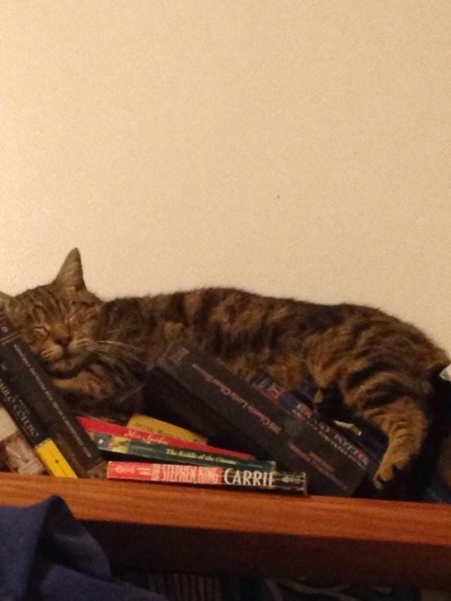 Коты, которые моментально отключаются (15 фото)