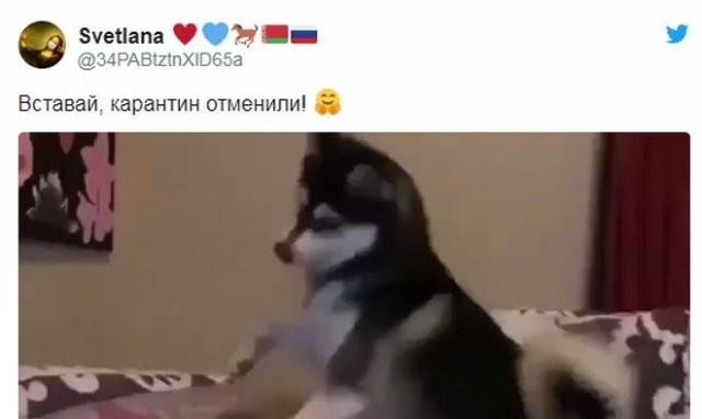 Реакция россиян на отмену режима самоизоляции (15 фото)