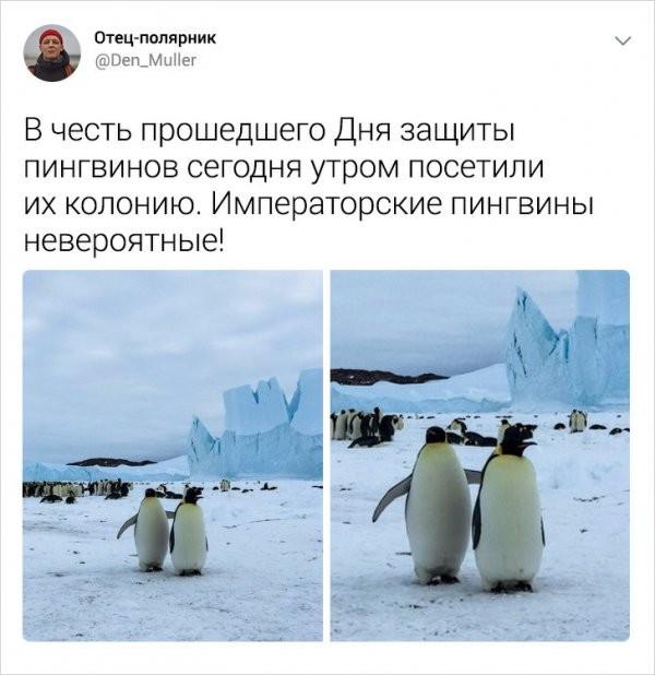 Подборка интересных твитов от полярника (25 фото)
