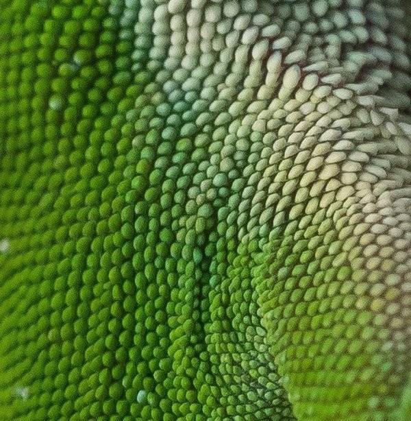 Чудеса макросъемки (23 фото)