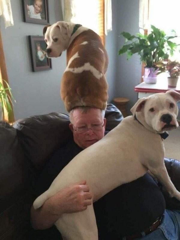 Подборка забавных собак, которые на дадут заскучать хозяевам (15 фото)
