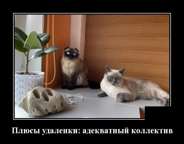 Демотиваторы (20 фото) 15.06.2020