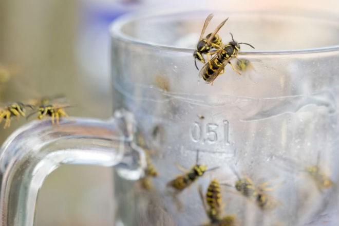 Почему осы становятся летом агрессивными (2 фото)