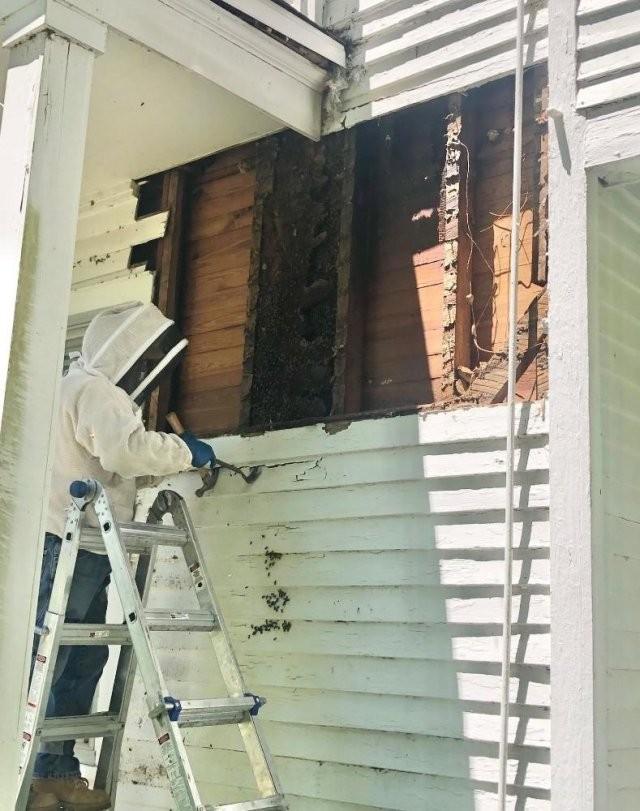 Шум в стене несколько лет беспокоил хозяина дома (7 фото)
