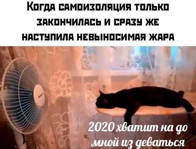 Коронавирус, самоизоляция и работа: лучшие мемы в Сети (15 фото)