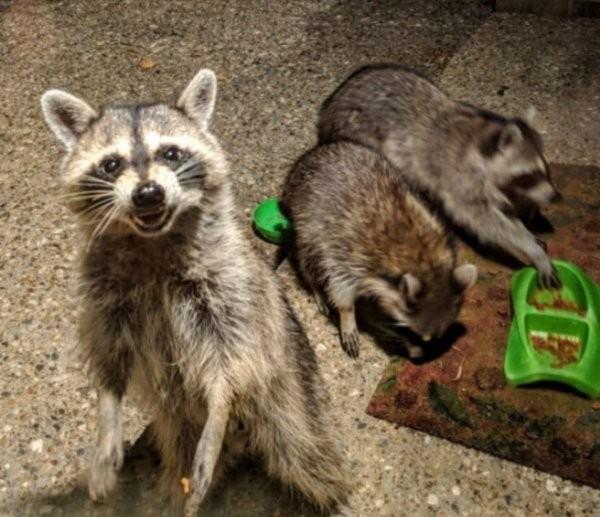 Очень нефотогеничные животные (15 фото)