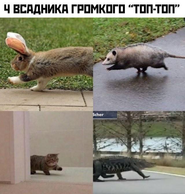 Подборка прикольных фото (60 фото) 19.06.2020
