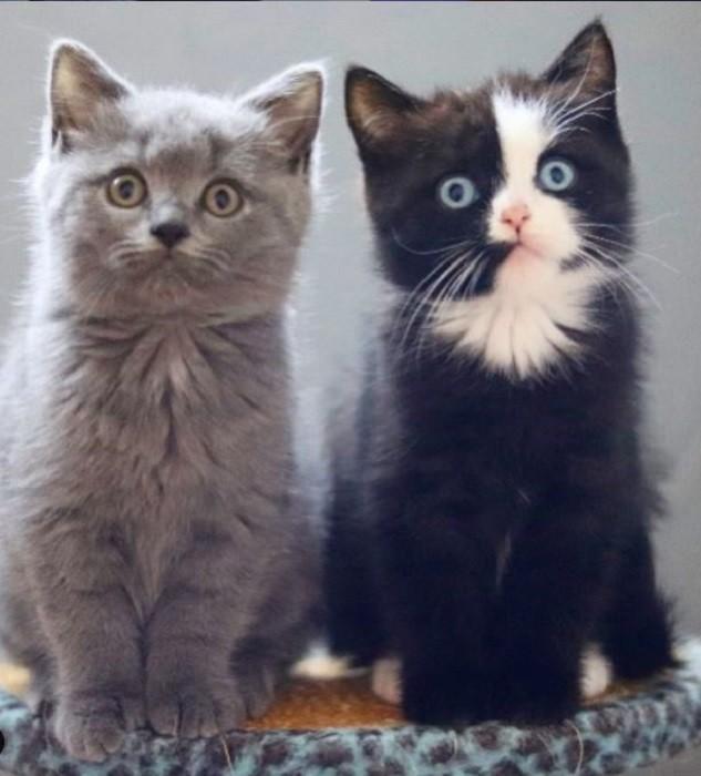 Как выглядит потомство кота с самым нестандартным окрасом (9 фото)