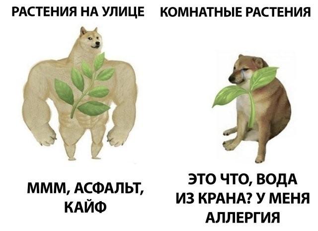 Подборка прикольных фото (61 фото) 26.06.2020