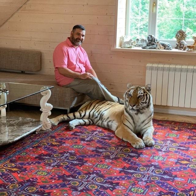 Тимати купил себе настоящего тигра, но получив волну хейта (5 фото)