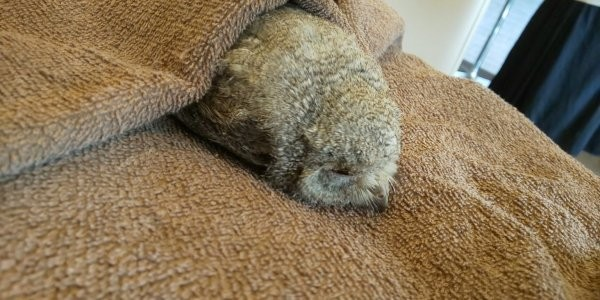 Сенсационное открытие: пользователи узнали, как спят совята (10 фото)