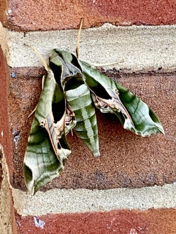 Животные, с габаритами которых природа немного перестаралась (18 фото)