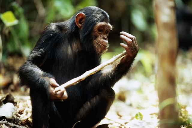 Факты о животных, которые вас удивят (15 фото)