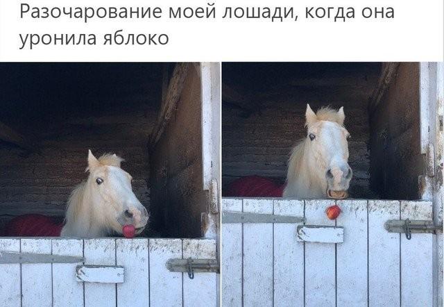 """Животные, которые поняли значение слова """"провал"""" (16 фото)"""