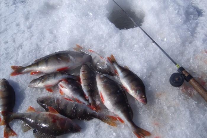 Зачем рыбаки возле лунки оставляют небольшую рыбку (6 фото)