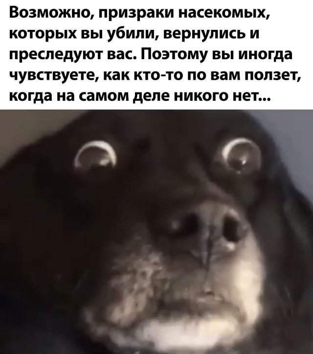 Подборка прикольных фото (63 фото) 13.07.2020
