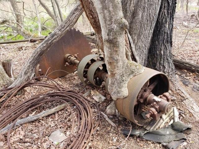 """Деревья, которые готовы """"сожрать"""" все вокруг (20 фото)"""