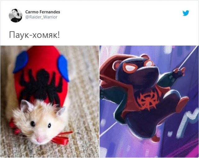 Хомяк Куро сбежал из клетки, и стал звездой социальных сетей (9 фото)