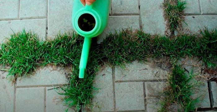 Простой способ, который позволит избавиться от сорняков (5 фото)