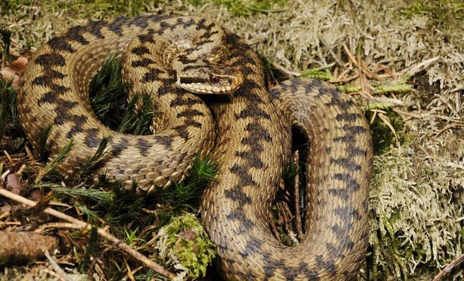 Основные различия двух похожих змей (3 фото)