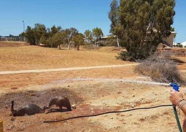Самые обычные фотографии из Австралии (18 фото)