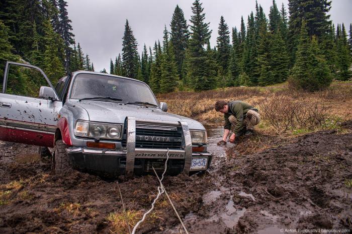 Как в Канаде грибы собирают (36 фото)