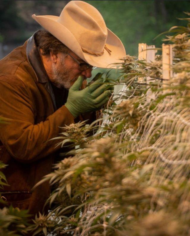 Джеймс Белуши и его конопляная ферма (15 фото)