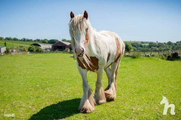 Волонтеры спасли лошадь, у которой почти не было шансов (8 фото)