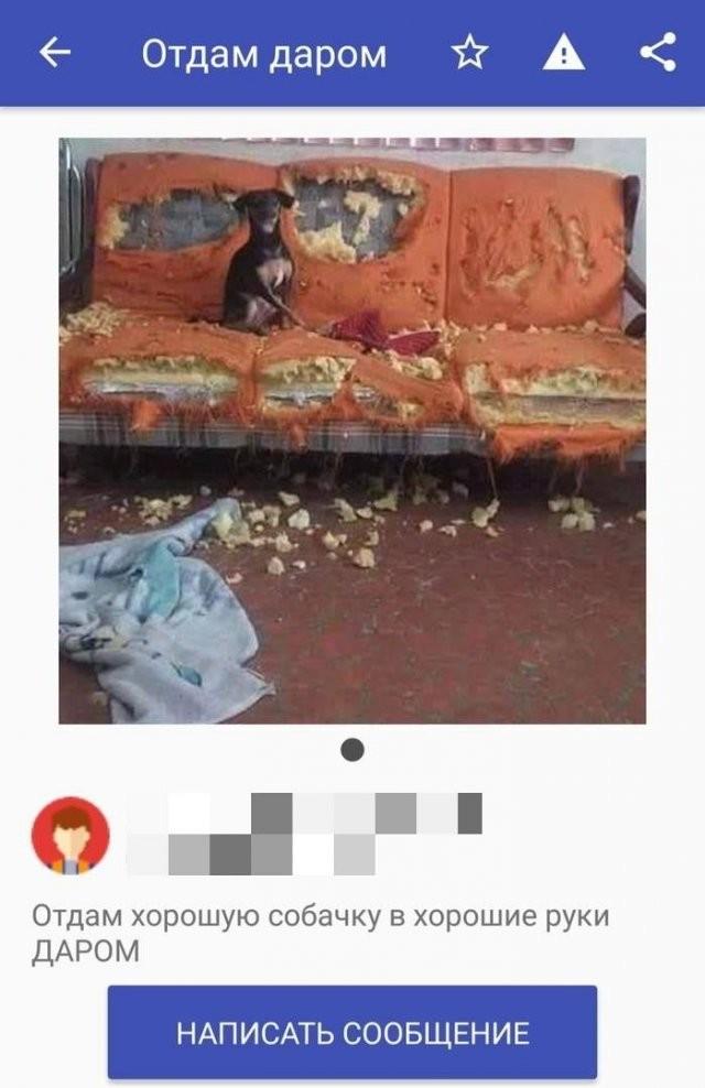 Смешные любители халявы в Интернете (13 фото)