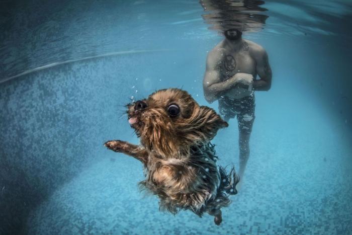Собаки в воде (18 фото)