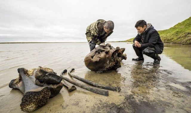 На Ямале нашли останки мамонта (7 фото)