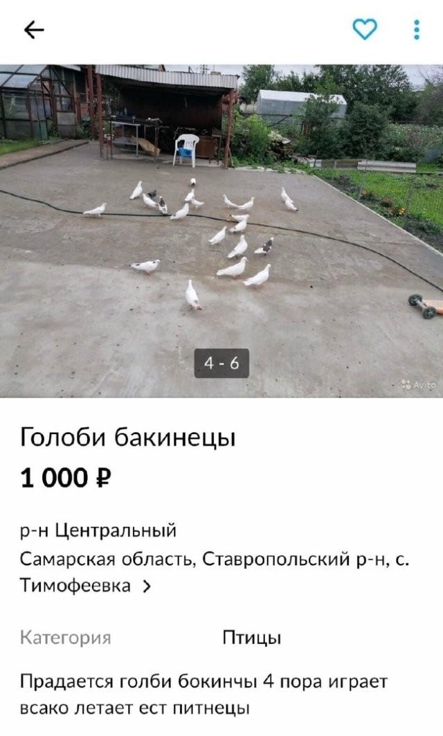 Безумные ситуации, с которыми можно столкнуться в России (15 фото)