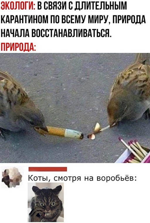 Скриншоты из социальных сетей (25 фото)