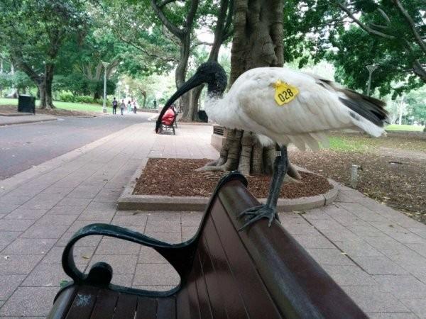 Какие животные заменяют голубей в разных странах (10 фото)