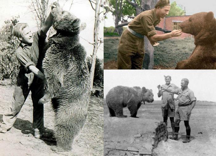 История медведя, воевавшего во Второй мировой войне (фото)