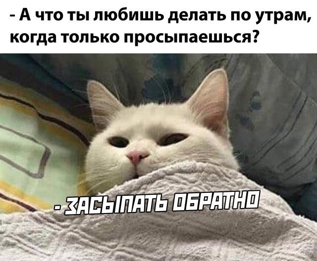 Подборка прикольных фото (65 фото) 06.08.2020