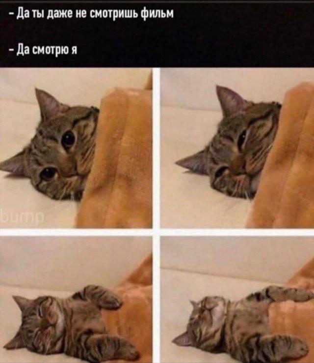 Лучший юмор из Сети (14 фото)