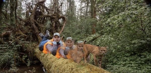 Фотограф поставил фотоловушку, чтобы запечатлеть рысь (5 фото)