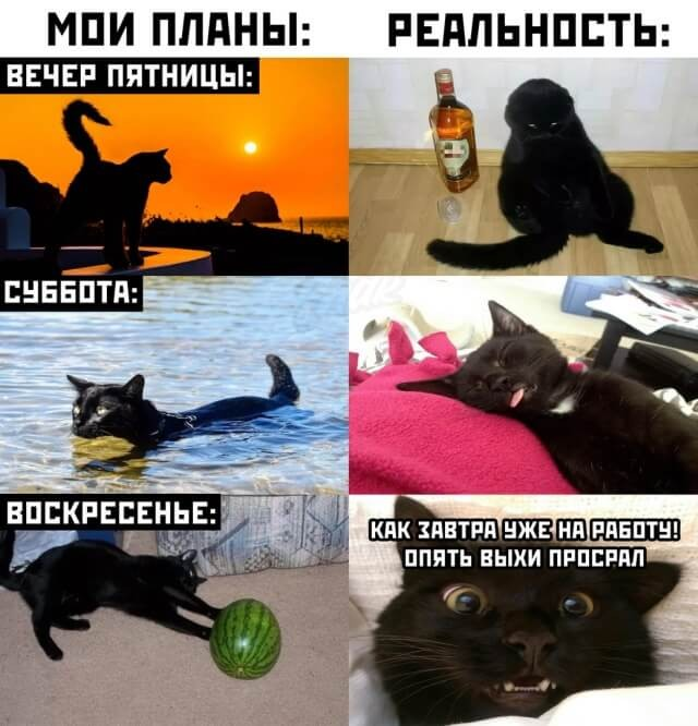 Подборка прикольных фото (63 фото) 10.08.2020