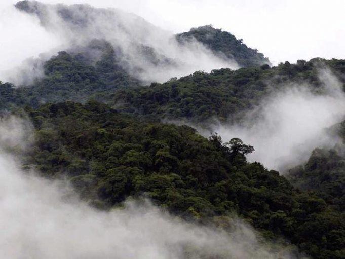 Красивейшие леса мира, которые показывают силу Матери Природы (12 фото