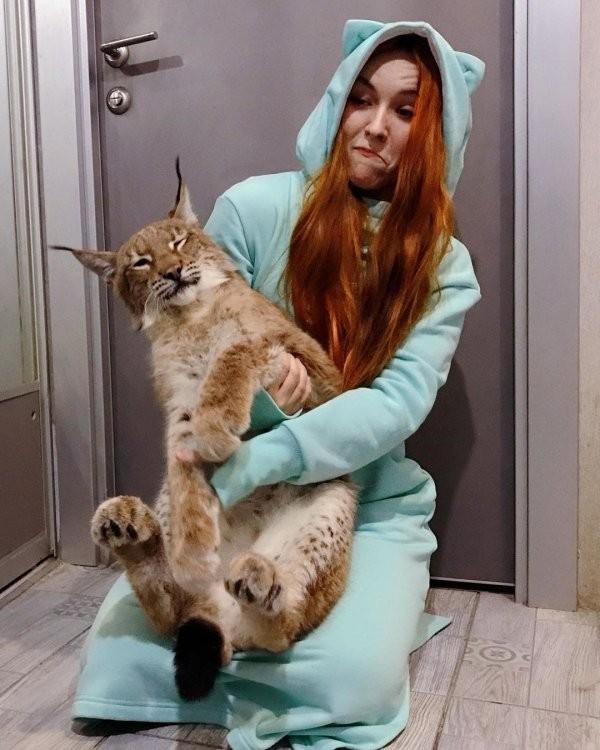 Девушка из Санкт-Петербурга спасла двух рысей и приютила (15 фото)